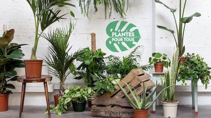 Quatrième édition des ventes éphémères de plantes