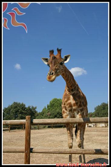 Girafe au zoo La Barben