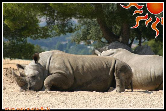 rhinoceros de La Barben